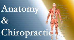 Johnson Chiropractic proudly delivers chiropractic care based on knowledge of anatomy to diagnose and treat spine related pain.